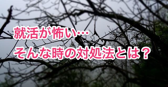 tree-952109_640
